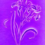 Day Lily (purple) 14x11 $85